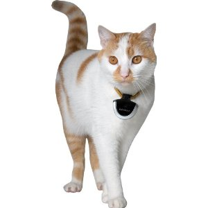 The Cat Camera slips easily on to a cat's collar.