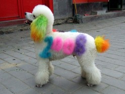 Pet Dog Grooming: China Style and Creative Colouring