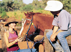 Cattle Station Work in the Outback