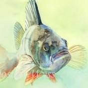 Lisa80210 profile image