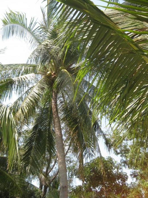 Coconut tree made it seem like a tropical Island