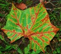 Fun Fall Leaf Projects