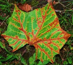 Fun Fall Leaf Projects