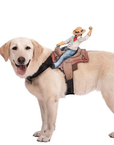 Cowboy Rider