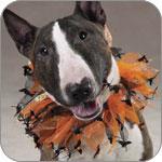 Dog Halloween Scrunchies