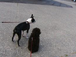 His first doggie friend...Bubba