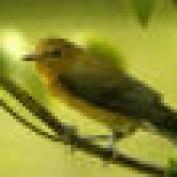 chezka mae profile image