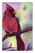 Illustrating Birds Using the Scribble Method
