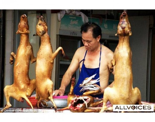 Dog meat sold at a Dog Meat Festival in Yulin, China