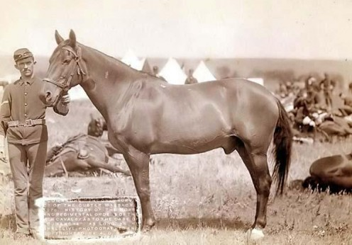 "The stallion, Comanche, the only survivor of the Custer Massacre 1876 ""No Copyright Infringement Intended."""