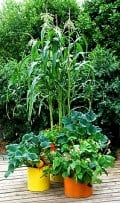 How to Grow Vegetables in Pots and Containers - Tips, Guides, Facts