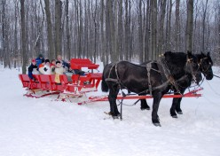 Romantic Valentine's Day Idea – A Horse Drawn Sleigh Ride
