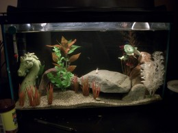 Keeping bettas with other fish for Tank mates for betta fish