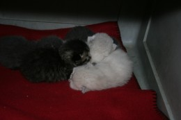 Kittens rolled up together
