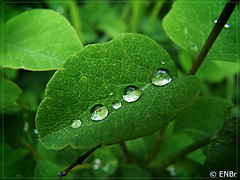Dew on a leaf from Evanickelbridger Source: flickr.com