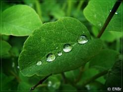 Life in Abundance- a poem