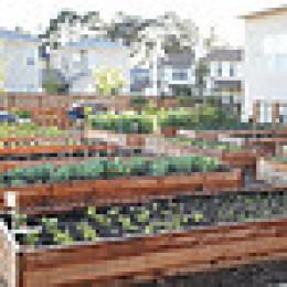 Vallejo People's Garden
