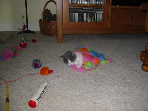 One of Dixie's kitten pictures, awww... she still to this DAY loves these little blankets, I think they bring back happy kitten memories for her!