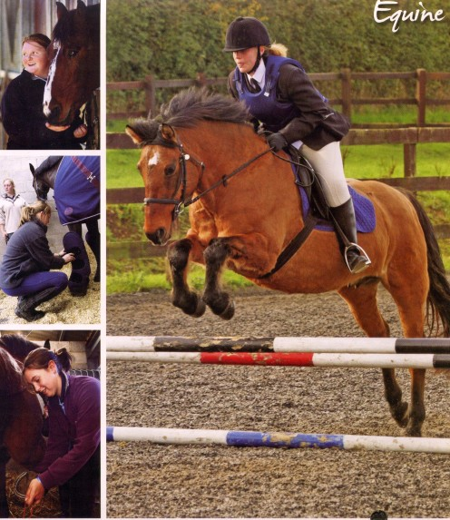 Equine management