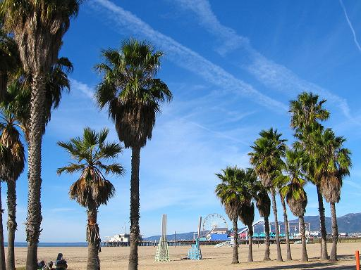 The endless blue sky and palm trees...