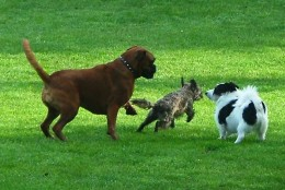 """Dogs doing what they do best. """"You chase me then I'll chase you"""""""