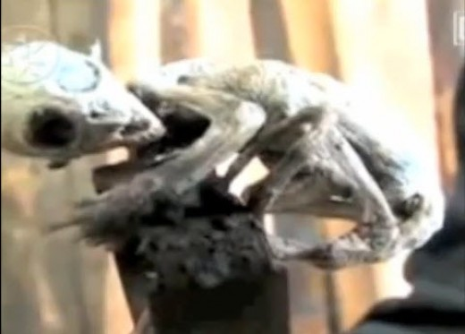 A Photograph of What Appears to be Baby Alien: It is humanoid with reptilian characteristics. It is said to have been caught and killed by a Mexican farmer in 2007. Mexican scientists are studying the strange creature and are mystified by its origins