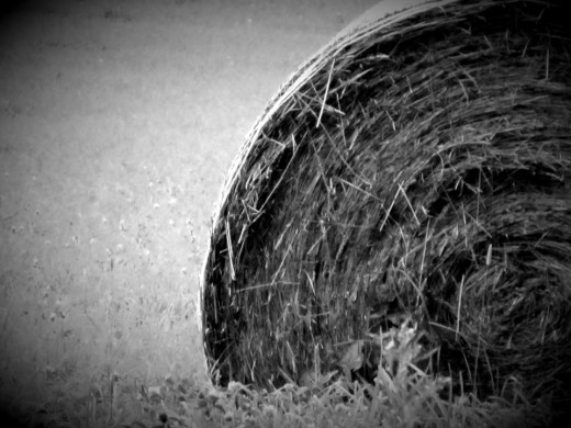 "day 25 - ""H"" for hay"