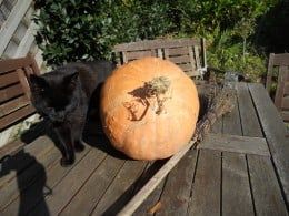 Black cat, broomstick and pumpkin, all ready for Halloween!