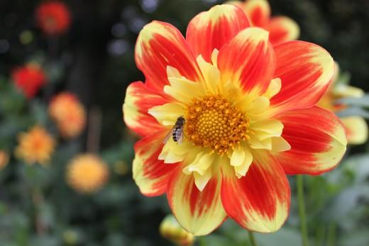 Flower, Gronvik, sxc.hu