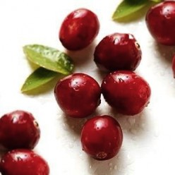 Fresh cranberries.  Clip art from Food and Health.com
