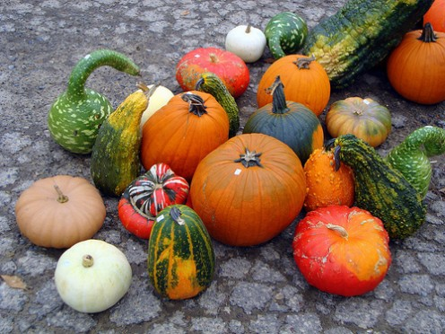 Bright and stout, these winter gourds and squash make good ornaments. Show them off and you'll done with them, turn them into culinary delights.