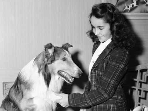 A YOUNG LIZ TAYLOR MEETS A FAMOUS CANINE CO-STAR, LASSIE.