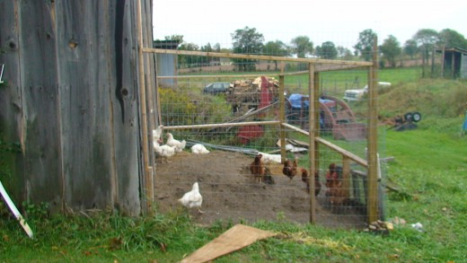 Outdoor chicken run.