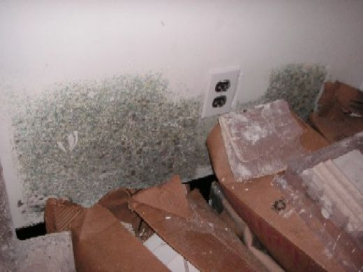 Mold growing on a wall in a damp room. Moisture causes mold and mildew to grow.