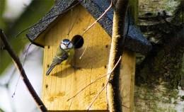 Bird at Nestbox