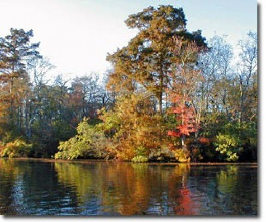 Pocomoke River, Maryland. Photo credit from Maryland Department of Natural Resources website.