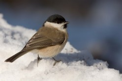 Help Our Bird Buddies Get Thru Winter