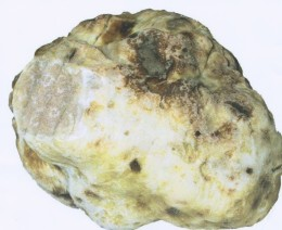 Italy's White Truffle:  Tartufo Bianco delicately savory.
