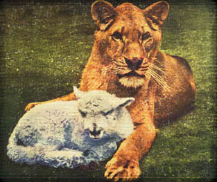 Truce, but remember who's king of the jungle