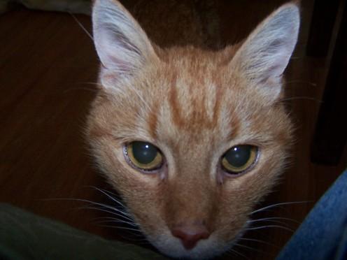 Scottie (1993- 2009)