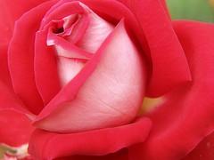 Loving You from Zaki :-) Source: flickr.com
