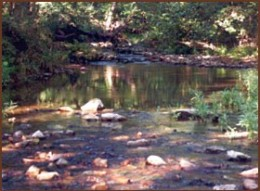 Bolders or other debris blocking the path of the stream can be a place to locate gold. Look on the downstream side where eddies appear and slow the flow of gold flake.