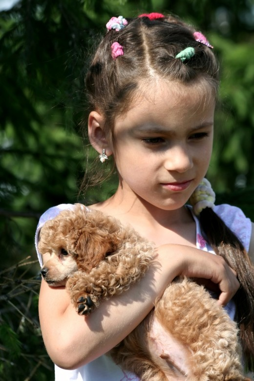 Poodles are often considered to be hypoallergenic dogs.