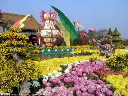 Chrysanthemum exhibition