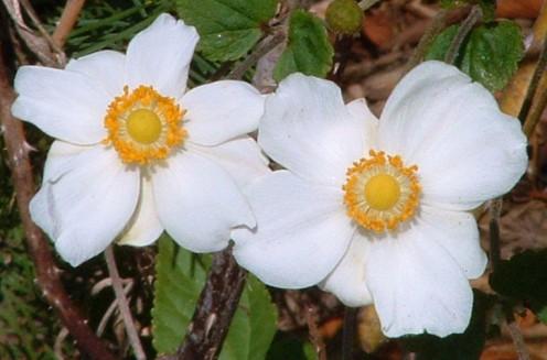 Flowers served sunny-side up.