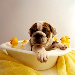 11 Useful Tips for Bathing a Dog Who Hates Water
