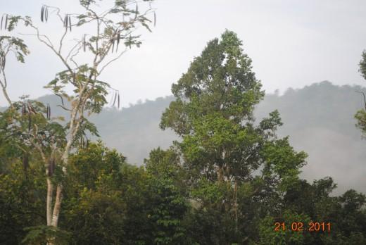 Beautiful pristine rainforests of Malaysia