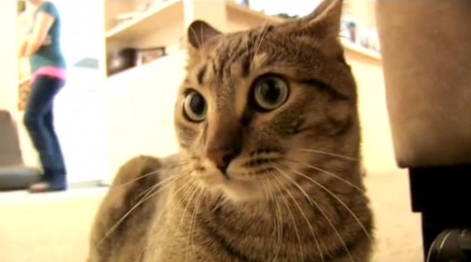 A screen grab of Sparta, the mean kitty from TheMeanKitty channel on YouTube owned by Cory Mr. Safety Williams