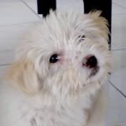 itops profile image
