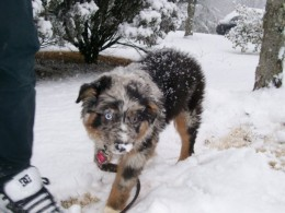 12 weeks and first time in the snow. She was eating it.